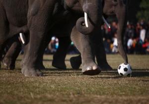 9th International Match in full swing (Image from REUTERS/Navesh Chitrakar)